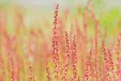 Flores rosadas de la primavera, fondo blured Imagen de archivo