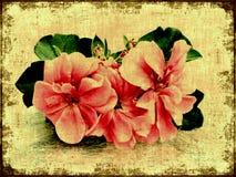 Flores rosadas de la vendimia stock de ilustración
