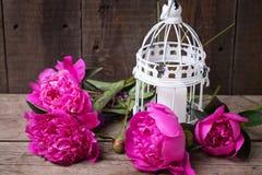 Flores rosadas de las peonías y jaula decorativa con la vela en w envejecido Fotografía de archivo libre de regalías