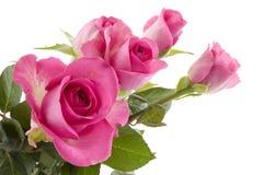 Flores rosadas de las rosas Imágenes de archivo libres de regalías