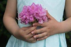 Flores rosadas de una muchacha del rododendro que se sostiene en manos Imagenes de archivo