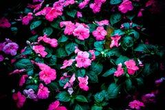 Flores rosadas del arte y fondo negro Imagen de archivo libre de regalías