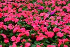 Flores rosadas del arte y fondo negro Imagen de archivo