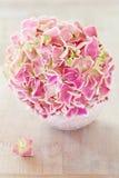 Flores rosadas del Hydrangea Foto de archivo libre de regalías
