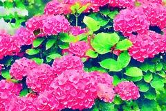 Flores rosadas del Hydrangea Stylization de la acuarela libre illustration