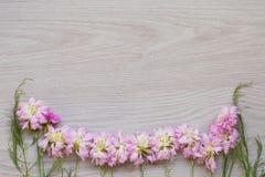 Flores rosadas del jardín sobre fondo de madera gris Foto de archivo
