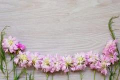 Flores rosadas del jardín sobre fondo de madera gris Imagenes de archivo