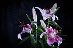 Flores rosadas del lirio Fotos de archivo