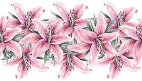 Flores rosadas del lirio aisladas en el fondo blanco Ejemplo del trabajo hecho a mano de la acuarela Frontera inconsútil del marc Imagen de archivo