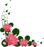 Flores rosadas del lirio con las hojas verdes Foto de archivo libre de regalías