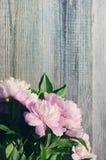 Flores rosadas del peony El ramo de peonías rosadas se cierra para arriba Imagenes de archivo