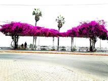 Flores rosadas del resorte Fotografía de archivo libre de regalías