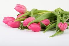 Flores rosadas del tulipán Fotos de archivo