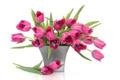 Flores rosadas del tulipán Foto de archivo