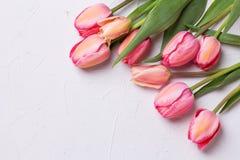 Flores rosadas del tulipán en fondo texturizado Aún vida floral Imagen de archivo libre de regalías