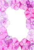 Flores rosadas, diseño del marco Imagen de archivo