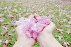 Flores rosadas dulces en manos Fotografía de archivo