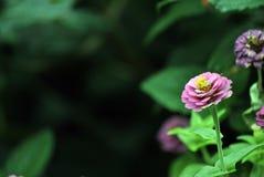 Flores rosadas en ciudad Fotos de archivo libres de regalías