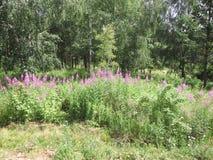Flores rosadas en el bosque Fotografía de archivo