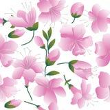Flores rosadas en el fondo blanco. Imagen de archivo