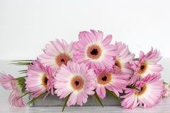 Flores rosadas en el fondo blanco Fotografía de archivo