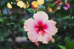 Flores rosadas en el jardín fotografía de archivo libre de regalías