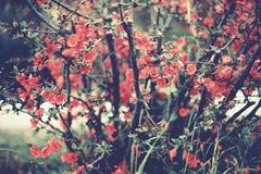 Flores rosadas en el jardín Imagen de archivo libre de regalías