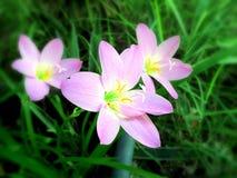 Flores rosadas en el jardín Fotos de archivo