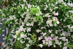 Flores rosadas en el jardín Fotografía de archivo