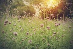 Flores rosadas en el jardín con luz del sol Imágenes de archivo libres de regalías