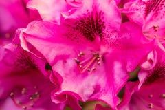 Flores rosadas en el jardín Fondo del verano Imagenes de archivo