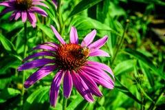 Flores rosadas en el país Foto de archivo libre de regalías