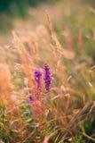 Flores rosadas en el prado Foto de archivo libre de regalías