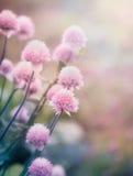 Flores rosadas en el prado Fotos de archivo