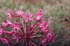 Flores rosadas en el sol foto de archivo