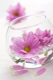 Flores rosadas en florero foto de archivo