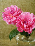 Flores rosadas en florero Fotografía de archivo libre de regalías