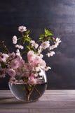 Flores rosadas en florero en fondo de madera gris Floración de la primavera Ramo de la flor Imagen de archivo libre de regalías
