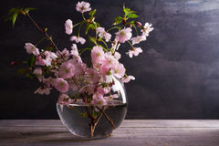 Flores rosadas en florero en fondo de madera gris Floración de la primavera Ramo de la flor Foto de archivo libre de regalías