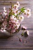 Flores rosadas en florero en fondo de madera gris Floración de la primavera Ramo de la flor Imágenes de archivo libres de regalías