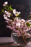 Flores rosadas en florero en fondo de madera gris Floración de la primavera Ramo de la flor Fotos de archivo