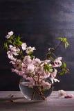 Flores rosadas en florero en fondo de madera gris Floración de la primavera Ramo de la flor Fotografía de archivo