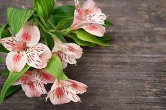 Flores rosadas en fondo de madera Fotos de archivo libres de regalías