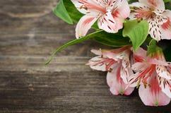 Flores rosadas en fondo de madera Imagen de archivo libre de regalías