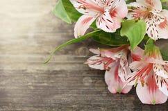 Flores rosadas en fondo de madera Foto de archivo libre de regalías