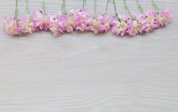 Flores rosadas en fondo de madera gris Fotos de archivo libres de regalías