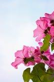 Flores rosadas en fondo del cielo Imágenes de archivo libres de regalías
