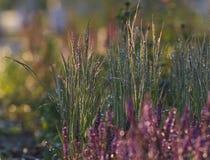 Flores rosadas en hierba verde mojada con la luz del sol fotos de archivo