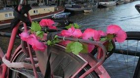 Flores rosadas en la bici en Amsterdam almacen de video