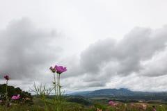 Flores rosadas en la colina Imagen de archivo